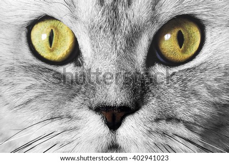 The muzzle of gray cat with green eyes close-up - stock photo
