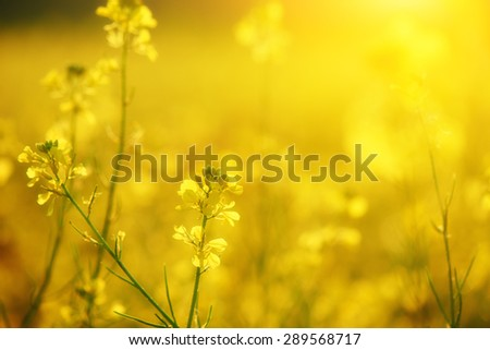 the natural floral background, yellow wildflowers - stock photo