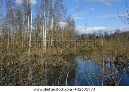 The nature of spring in the forest. Reflection of trees in water. The lake and the birch grove in early spring #9 - stock photo