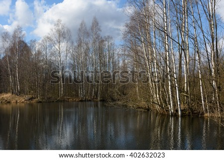 The nature of spring in the forest. Reflection of trees in water. The lake and the birch grove in early spring #3 - stock photo