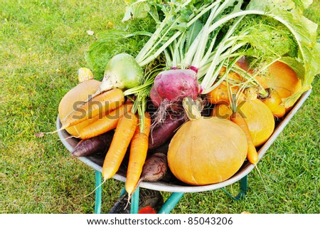 The new harvest. Many different vegetables lie in the garden cart - stock photo