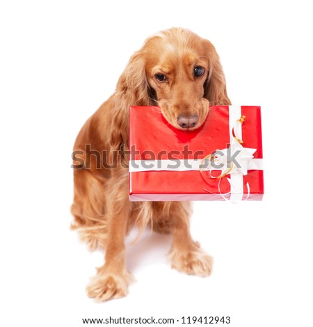 The nice dog with the present - stock photo