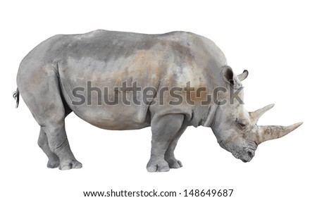 The Northern White Rhinoceros, or Northern Square-lipped Rhinoceros (Ceratotherium simum cottoni) isolated on white background. - stock photo