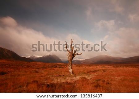 The, now gone, famous dead tree in Rannoch Moor, Glencoe, Scotland - stock photo