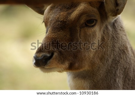The observing deer - stock photo