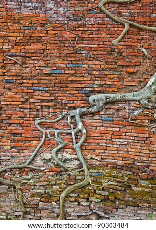 The old brick wall and tree roots background (ruins of Ayutthaya, old capital of THAILAND ) - stock photo