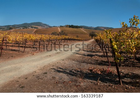 The Old Vineyard Road - stock photo