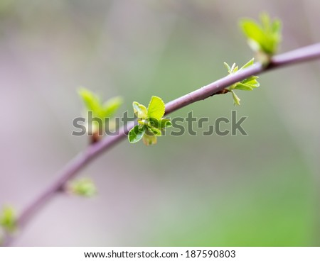 the opened buds on a tree branch - stock photo