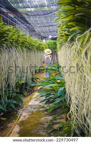 The orchid aerial root and the Greenhouse  - stock photo