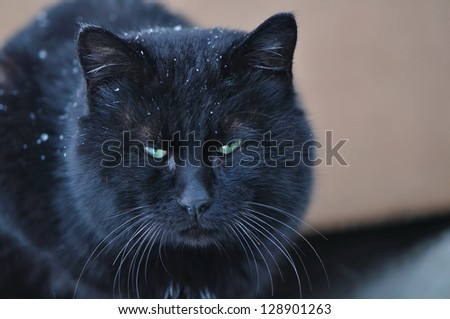 the outdoor cat freezes in snow - stock photo