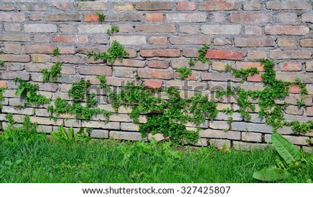 the outer facade of the old building is overgrown with grass - stock photo