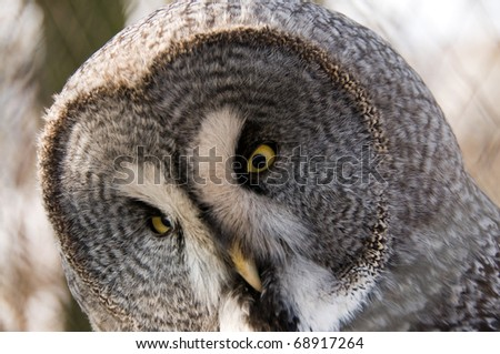 The owl is a symbol of wisdom. - stock photo