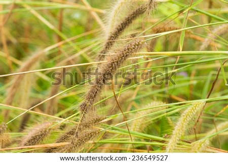 The pampas in morning sunlight - stock photo
