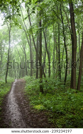 The path in a green forest in foggy weather. - stock photo