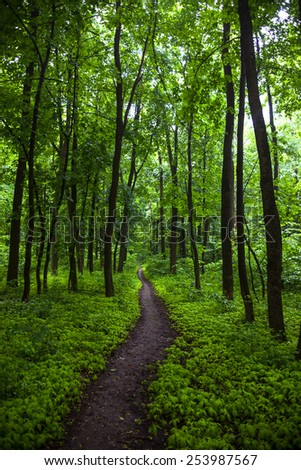 The path in a green summer forest. - stock photo