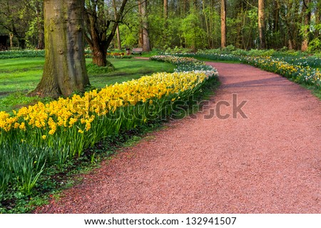 The path in the spring park. Yellow Narcissus. Spring landscape. - stock photo