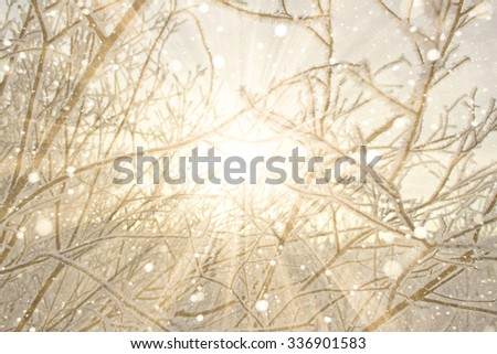 The pattern of the branches of trees covered with frost. Yellow, golden sunset, the dawn light. Sunny rays flare. Texture winter background. Copy space. - stock photo