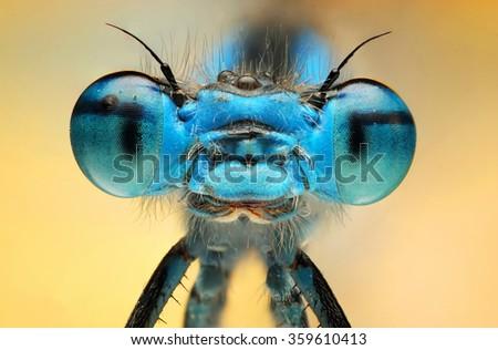 The picture shows a beautiful  damesfly Enallagma cyathigerum. Macro Shot. - stock photo