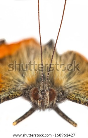 The picture shows a butterfly in closeup. - stock photo