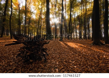 The picture shows a forrest during autumn. - stock photo