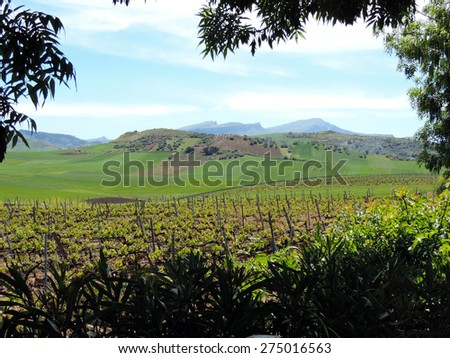 The picturesque landscape with a vineyard. Italy, Sicily. - stock photo