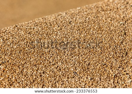 The pile of wheat grains close macro - stock photo