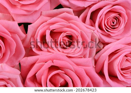 The pink beautiful rose as a background - stock photo