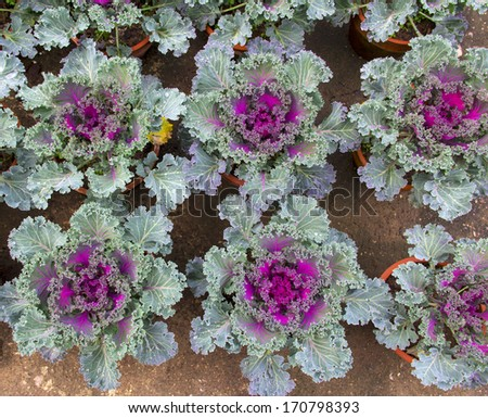 the plant in the greenhouse - stock photo
