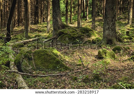 The primeval forest with mossed ground and boulders - stock photo
