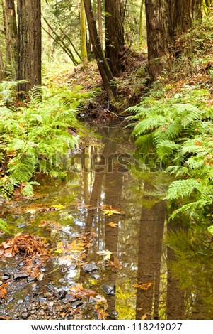 The primeval forest with the creek - stock photo