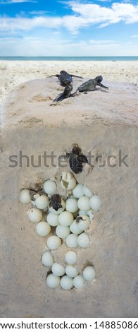 The process of hatching turtles. Installation - stock photo
