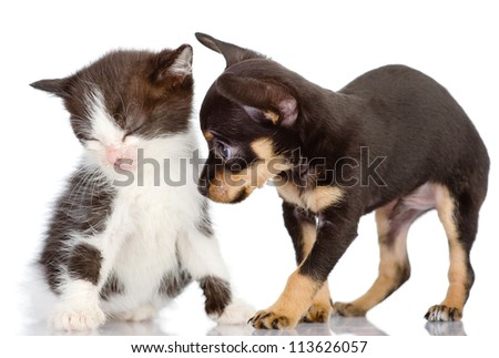 the puppy apologizes before a kitten. Isolated on a white background - stock photo