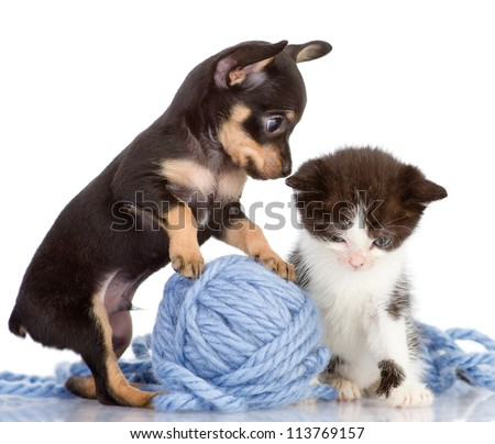 the puppy consoles a kitten. isolated on white background - stock photo