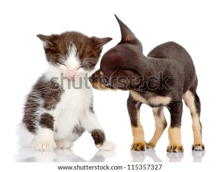the puppy looks at a kitten. Isolated on a white background - stock photo