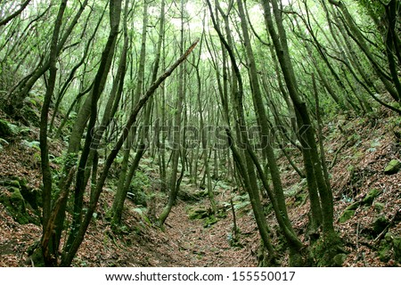 The rain relic forest on the Canary Islands, the island La Palma - stock photo