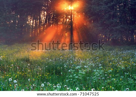 The rays of dawn sunlight illuminate the clearing with wildflowers - stock photo