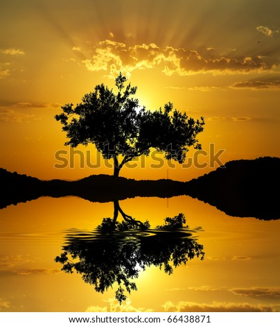 the rays of the sun and tree - stock photo