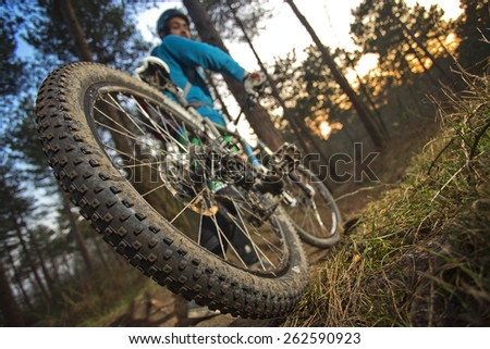 The rear wheel of a mountain bike on an outdoor trail through the woods at sunset. The cyclist has just skidded and came to a full stop just moments ago - stock photo
