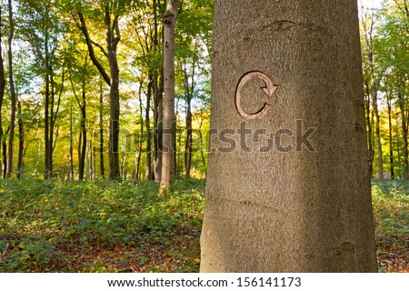 The recycle symbol carved into a tree in managed woodland. This tree was marked to be cut down as part of a forestry clearing project. - stock photo