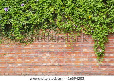 The red brick cover with green vine - stock photo