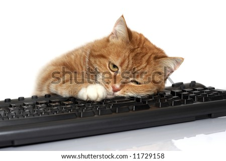 The red cat lays on the keyboard - stock photo