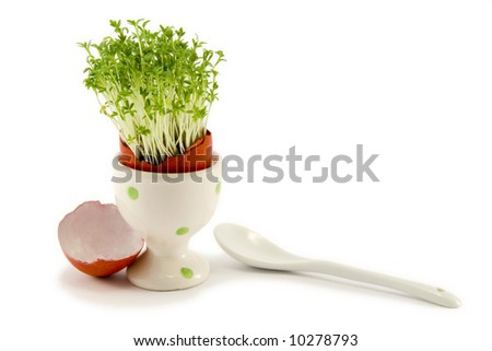 the red egg in egg-cup with growing cress and white spoon - stock photo