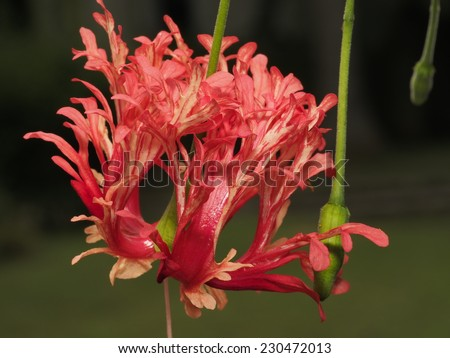 The red flowers - stock photo