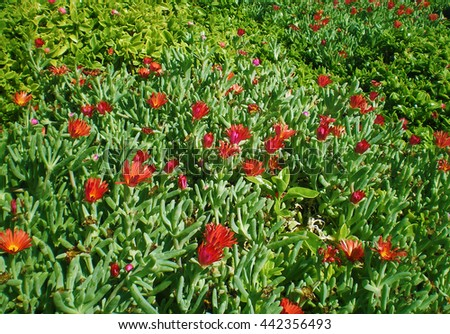 The red flowers near Palermo, Sicilia, Italy - stock photo