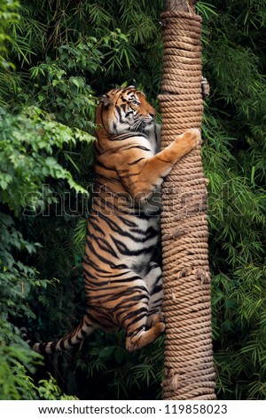 the red tiger climbs on a column. background is a green leaves - stock photo