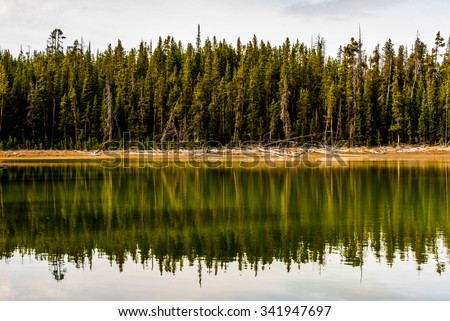 The reflection of a line of pine trees in Yellowstone National Park, WY. - stock photo