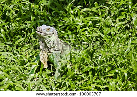 the reptiles in a zoo - stock photo