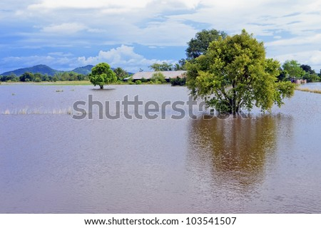 the rice fields Flooded damage - stock photo