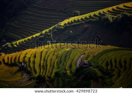 The rice terrace farms in Vietnam with the low key sun ray shining through some part of the farm in the morning. - stock photo