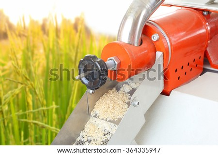 The rices were came out from the paddy separator machine on rice field background. - stock photo